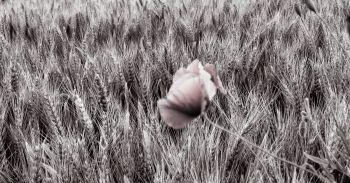 fleur.01