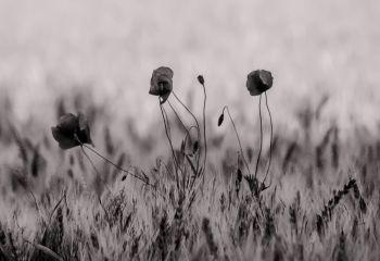 fleur.02