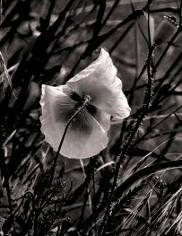 fleur.03