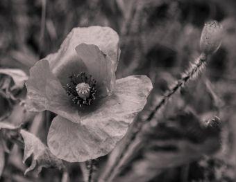 fleur.04