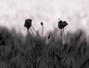 fleur.05