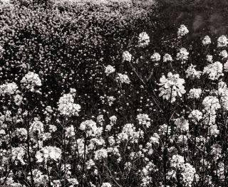 fleur.06