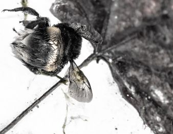 insecte.06