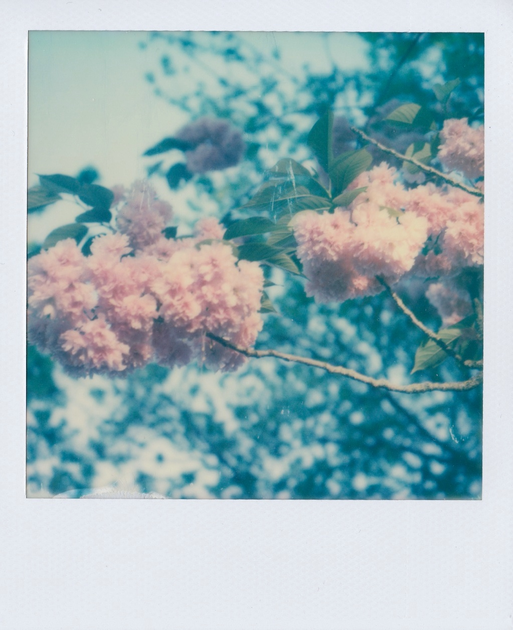 polaroid 600 Fleur