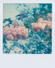 polaroid-fleur.01
