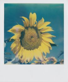 polaroid-fleur.04