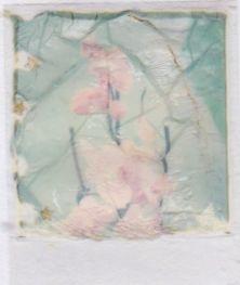 polaroid-fleur.05