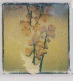 polaroid-fleur.07