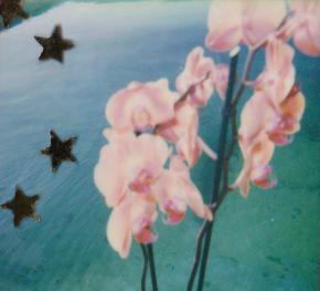 polaroid-fleur.08