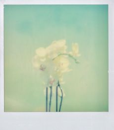 polaroid-fleur.09