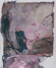 polaroid-fleur.11