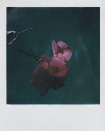 polaroid-fleur.12