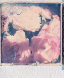 polaroid-fleur.14